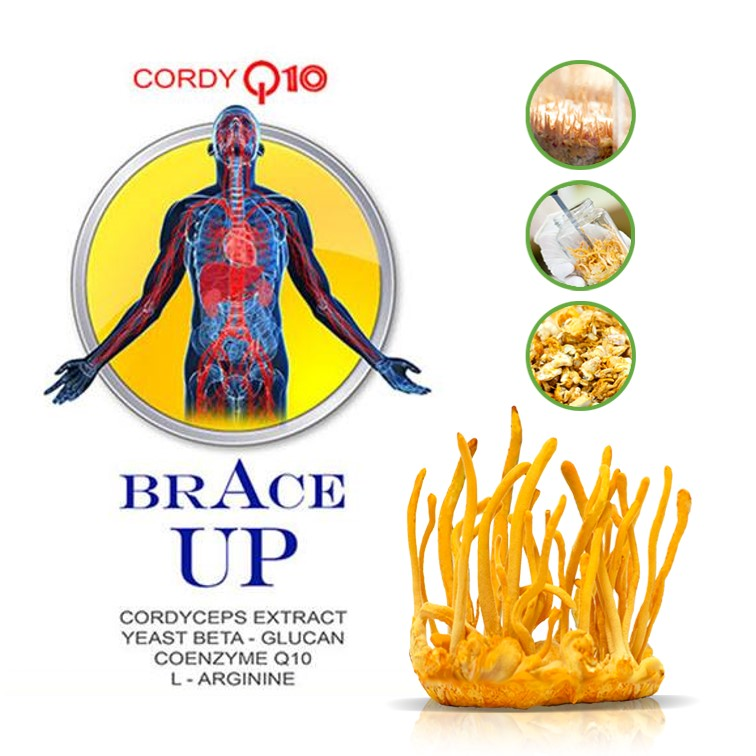 BRACE UP / Cordy Q10
